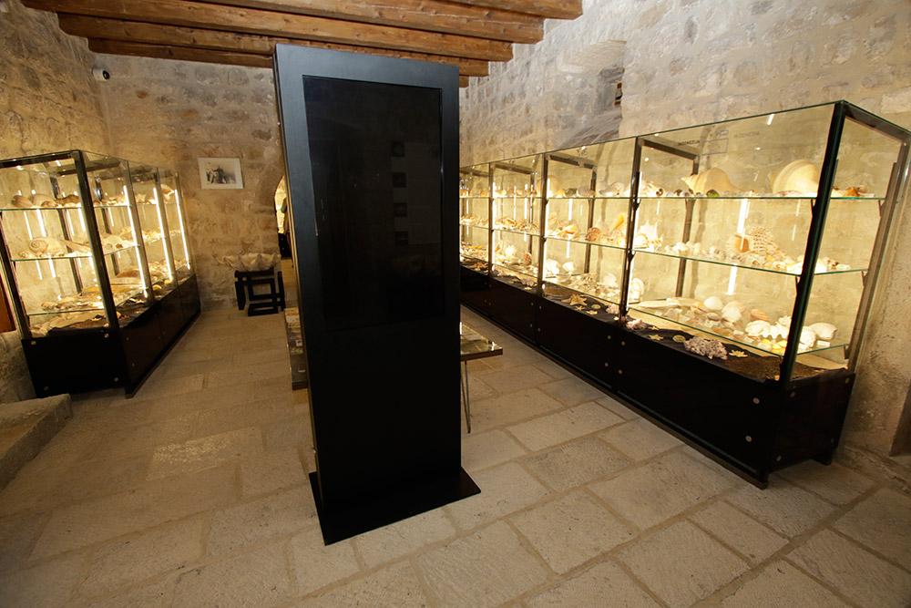 Malakološki muzej